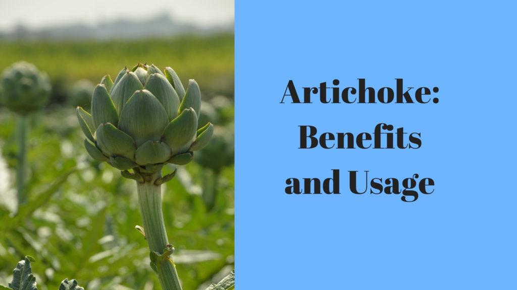 Artichoke: Benefits and Usage